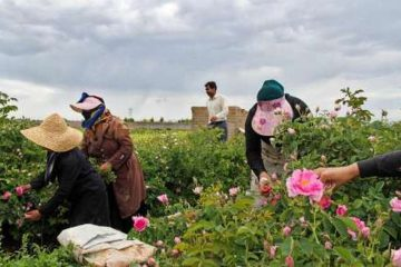 اقتصادناب_خراسان شمالی؛۱۷ درصد بیمه شدگان روستایی خراسان شمالی زنان هستند