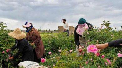 عکس از اقتصادناب_خراسان شمالی؛۱۷ درصد بیمه شدگان روستایی خراسان شمالی زنان هستند
